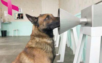 Des chiens détecteurs de tumeurs cancéreuses