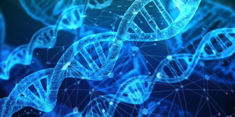 Comprendre l'épigénétique qui influe sur l'individu, sa descendance et l'évolution de l'espèce